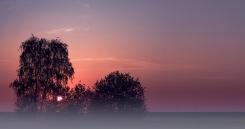 ....frueh-am-Morgen-II