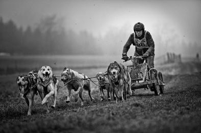 Schlittenhunderennen-II