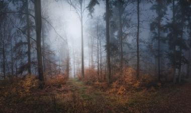 Nebelwald03